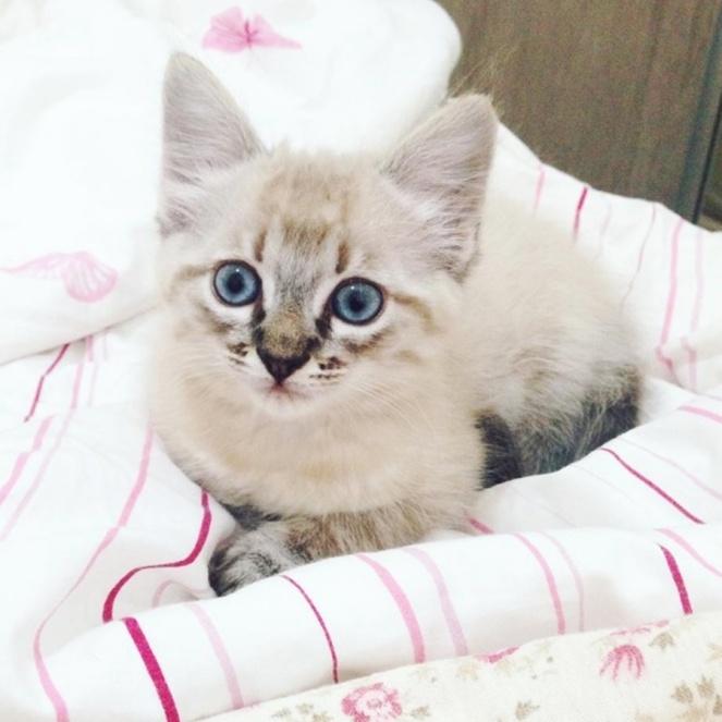 julia-rolim-filhote-de-gato-cherie