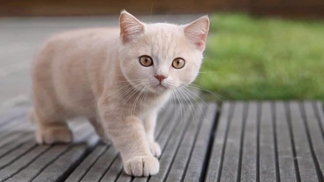 gato cat gatos cats brenda manéa moura 2017 blog loucuras de julia 01