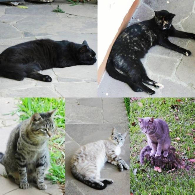 gato cat gatos cats brenda manéa moura 2017 blog loucuras de julia 02