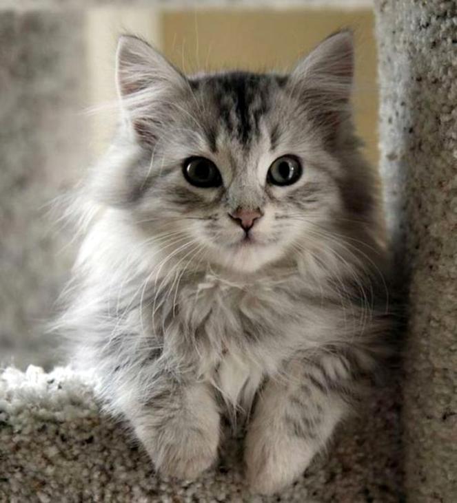 gato cat gatos cats brenda manéa moura 2017 blog loucuras de julia 03