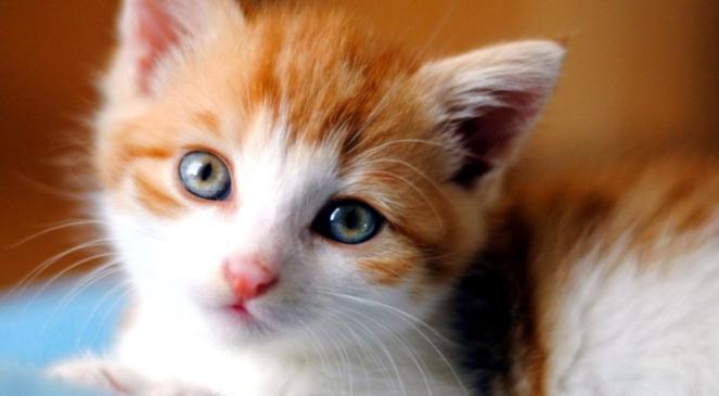 gato cat gatos cats brenda manéa moura 2017 blog loucuras de julia 05