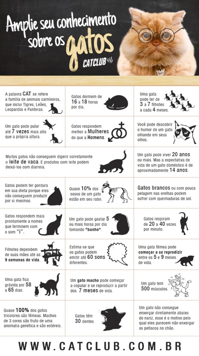 gato cat gatos cats brenda manéa moura 2017 blog loucuras de julia 08