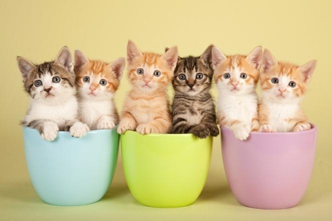 gato cat gatos cats brenda manéa moura 2017 blog loucuras de julia 09