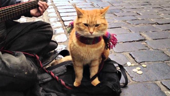 um gato de rua chamado bob livro filme brenda manea 2017 blog loucuras de julia 06